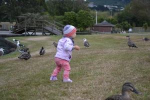 Chasing Ducks & Seagulls